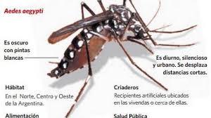 mosquito del dengue desccipto