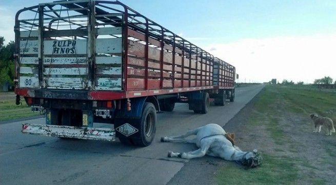 accidente caballo