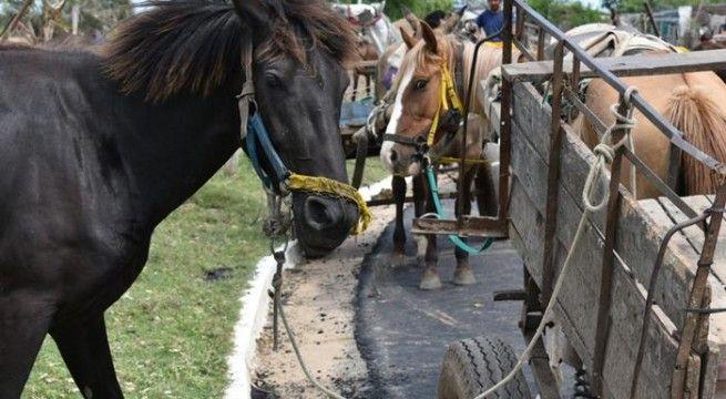 carro caballo