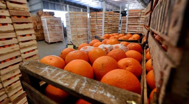 citrus a china