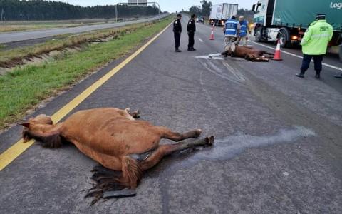 accidente animales sueltos